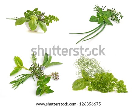 Medicinal and culinary herb leaf collection, isolated on white background. - stock photo
