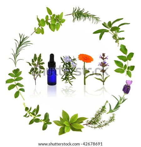 Medicinal and culinary herb leaves and flowers  in a circular design with an aromatherapy essential oil glass bottle, over white background. - stock photo