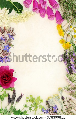 Medicinal flower and herb selection used in alternative herbal medicine over handmade cream paper background. - stock photo