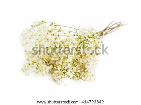 Medicinal flowers, wild Galium flower isolated - stock photo