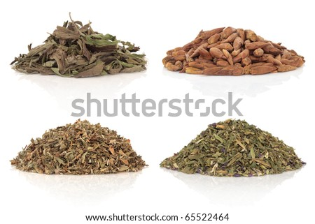 Medicinal herbs of balm of gilead, damiana, plantain and violet leaves and flowers also used in magical potions. Isolated over white background. - stock photo