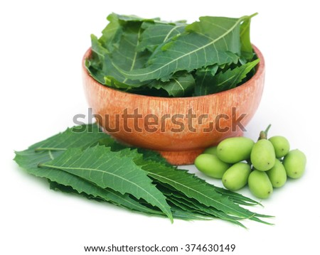 Medicinal neem fruits with leaves in a bowl over white backgrokund - stock photo