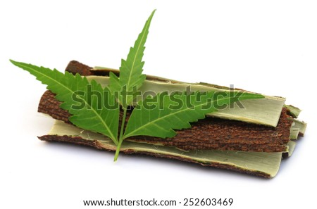 Medicinal neem leaves with bark of tree over white background - stock photo