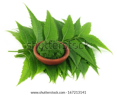 Medicinal neem leaves with paste on a brown bowl - stock photo