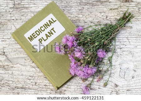 Medicinal plant Centaurea jacea (brown knapweed or brownray knapweed) and herbalist handbook on old table. Used in herbal medicine as well as a good honey plant - stock photo
