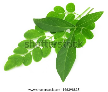 Medicinal vitex negundo  with moringa leaves - stock photo
