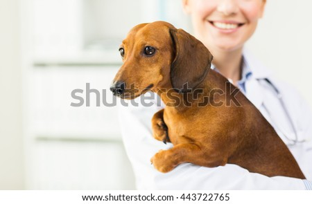 medicine, pet, animals, health care and people concept - close up of happy veterinarian or holding dachshund dog at vet clinic - stock photo