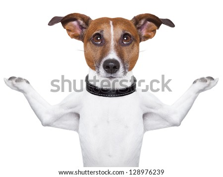 Meditating dog looking up with arms  raised up