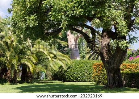 Mediterranean City park in Summer with Trees and Flowered Bushes - stock photo