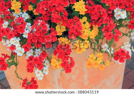 mediterranean flowerpot with nemesia summer flowers in mixed colors - stock photo