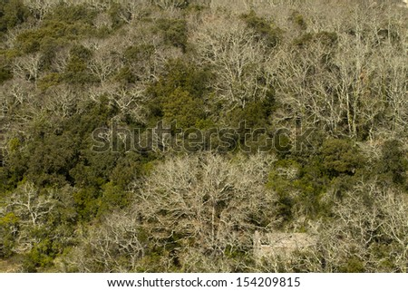 mediterranean forest as abstract background - stock photo
