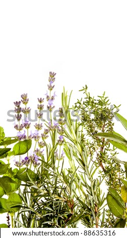 Mediterranean herbs on pure white background: lavender, sage, oregano, thyme. Spring and summer concept; cooking concept. Copy space. - stock photo
