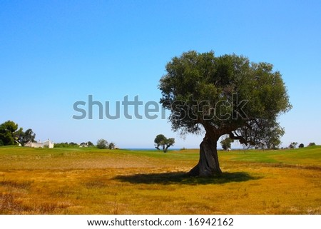 Mediterranean landscape - stock photo