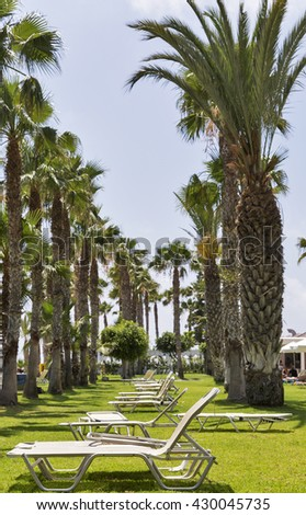 Mediterranean palm beach with sunbeds, Cyprus. Focus on foreground. - stock photo