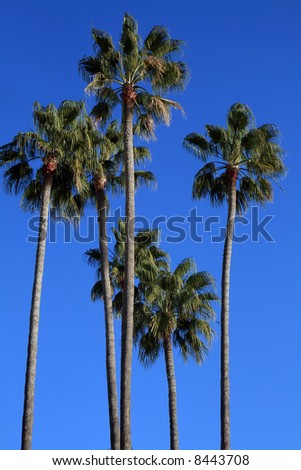 Mediterranean palm trees by the beach in the French Riviera. - stock photo