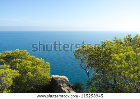 Mediterranean pine trees against the background of the ocean