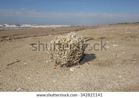 mediterranean sea sponge on Italian coast - stock photo