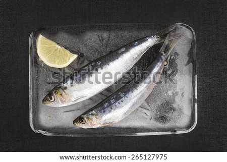Mediterranean seafood concept. Fresh anchovy fish on ice plate on black textured background.