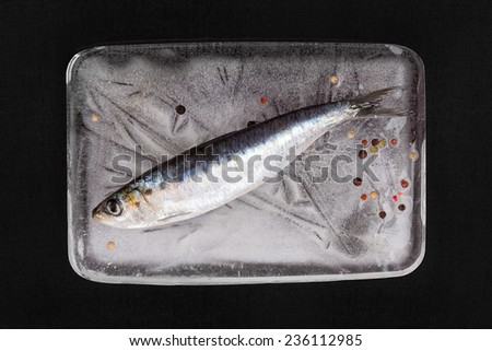 Mediterranean seafood concept. Fresh anchovy fish on ice plate with colorful peppercorns on black textured background. - stock photo