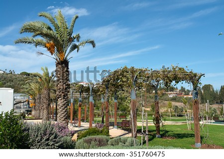 Mediterranean style city park with palm trees and grapes Israel