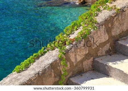 Mediterranean vegetation on stone wall near the Adriatic sea, Trsteno, Croatia - stock photo