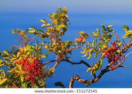 Mediterranean vegetation with the blue Adriatic sea in the background - stock photo