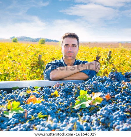 Mediterranean vineyard harvest farmer farming cabernet sauvignon grape field in Spain - stock photo
