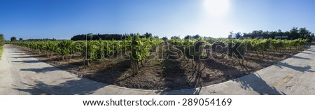 Mediterranean vineyard in a panoramic view - stock photo