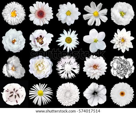 Mega Pack Natural Surreal White Flowers Stock Photo 574017514