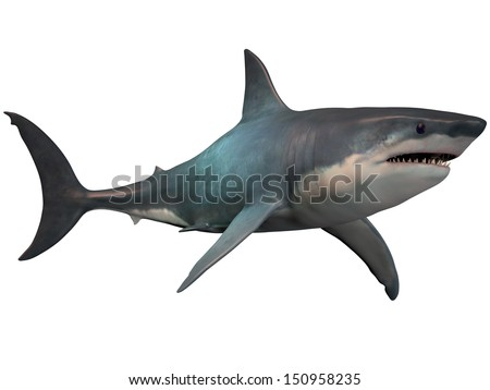 Megalodon on White - The Megalodon is an extinct megatoothed shark that existed in prehistoric times, from the Oligocene to the Pleistocene Epochs. - stock photo