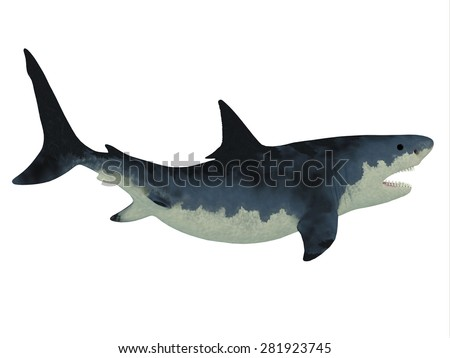 Megalodon Shark over White - Megalodon shark was very much like our Great White shark but a much larger size with razor sharp teeth. - stock photo