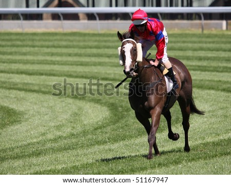 MELBOURNE - MARCH 13:Chouxmaani returns to scale after the PFD Food Service Handicap at Flemington on March 13, 2010 - Melbourne, Australia - stock photo