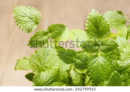 Melissa (lemon balm) leaves  - stock photo