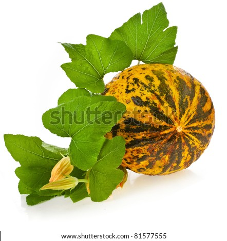 melon  with green leaves  isolated - stock photo
