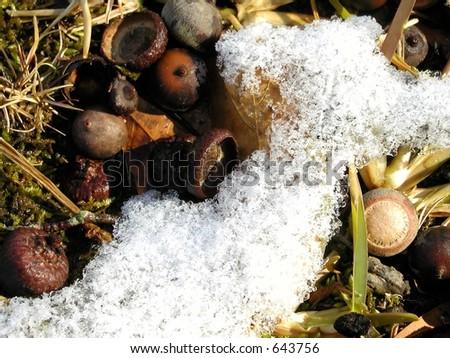 Melting Snow - stock photo