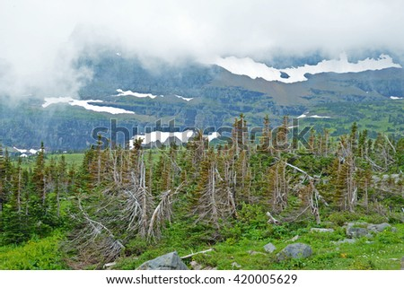Melting snow, fog, and green valley in Glacier National Park. - stock photo