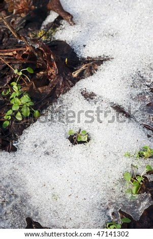 Melting wet snow with green plants growing and selective focus