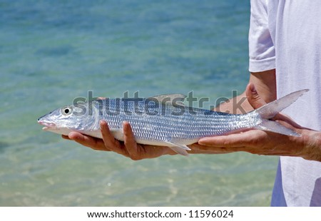 men holding fresh bonefish caught in cuba close up - stock photo