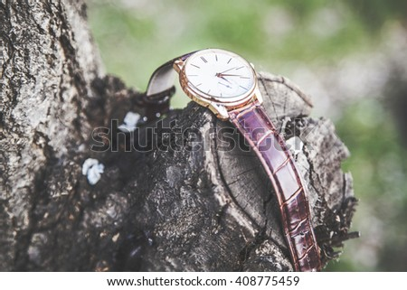 Men watch in nature on tree - stock photo