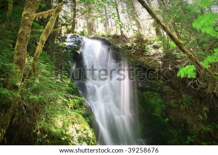 Merriman Falls in the Quinault temperate rainforest area of Olympic National Park
