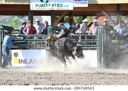 MERRITT, B.C. CANADA - May 30, 2015: Bull rider riding in the first round of The 3rd Annual Ty Pozzobon Invitational PBR Event. - stock photo