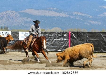 MERRITT, B.C. CANADA - MAY 5: unidentified Cowboy during the cutting horse event at The Merritt Cutting Horse Show May 5, 2012 in Merritt British Columbia, Canada - stock photo