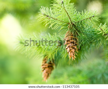 Merry Christmas and Happy New Year - space for your text - stock photo