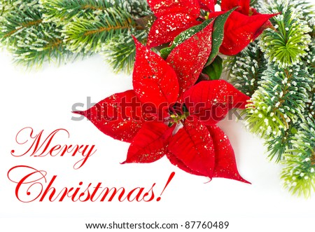 Merry Christmas! card concept. Red Poinsettia. Christmas Flower with golden decoration - stock photo
