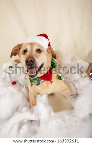 Merry Christmas from a dog - stock photo