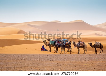 MERZOUGA, MOROCCO, APRIL 13, 2015: Local guides wait for tourists with camels used for tours into the erg  - stock photo