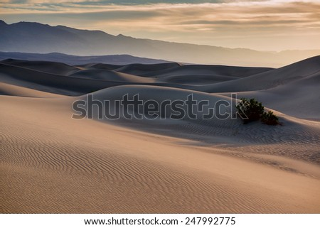 Mesquite flat sand dunes at sunrise. Death Valley NP, California. - stock photo