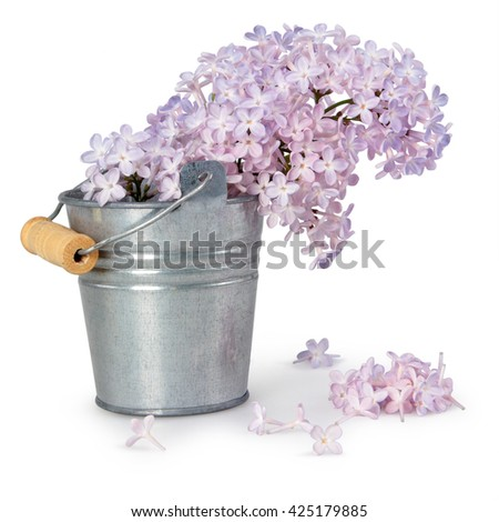 metal bucket with a bouquet of violet lilac spring flowers on white background