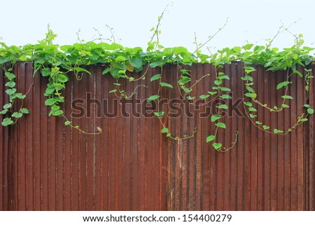 metal rusty wall and Ivy - stock photo
