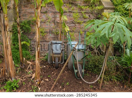 Metal Wheelbarrows Resting Against a Stone Wall Alongside some Banana Plants in the Walled Vegetable Garden at Knightshayes, Devon, England, UK - stock photo